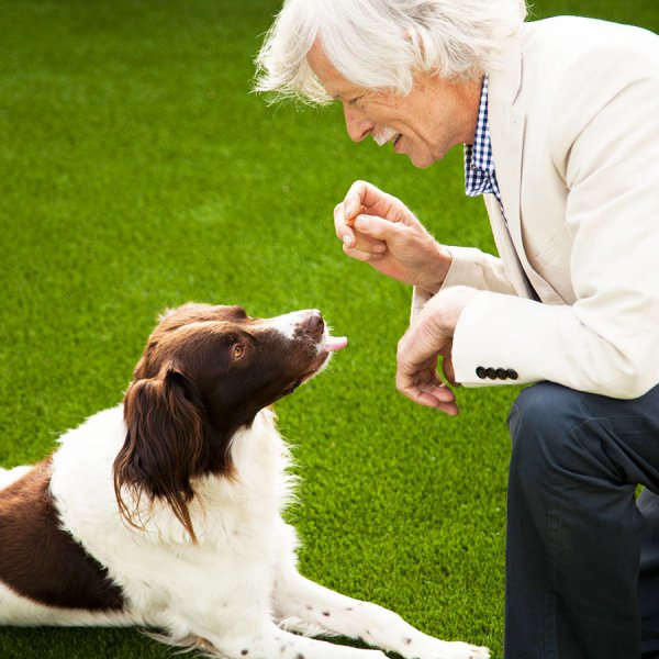 dog-on-artificial-grass