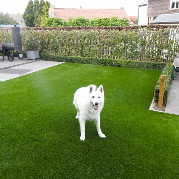 pet-friendly-garden